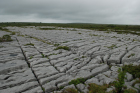 Sheshymore Limestone pavement exposes shallow water carbonates of the Brigantian, Slievenaglasha Formation. These classic kharstified exposures of tabular blocks of limestone pavement, Clints, are cut by vertical fractures, Grikes, which were widened by post glacial disolution (McNamara, & Hennessy, 2010). Fractures were intially established during Variscan folding (Coller, 1984).