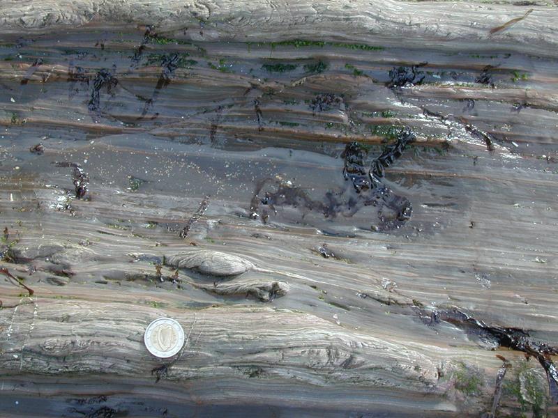 Late Cambrian - Peach