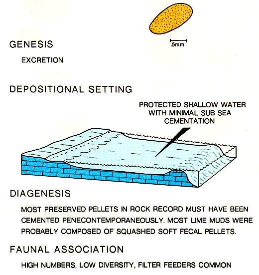 Characteristics of fecal pellets