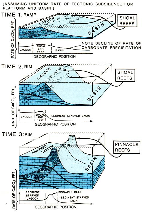 Development of steep reef margin and pinnacles furing Basin starvation